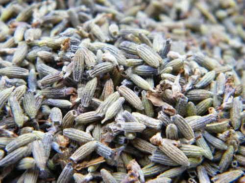 Dried lavender flowers fragrant