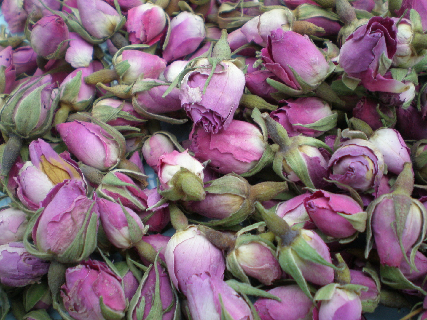 Pale Pink Rose Buds Dried Flowers Daisyshop