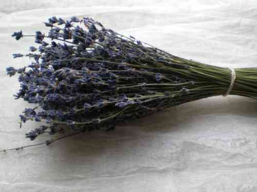 Lavender bunch blue bulk pack