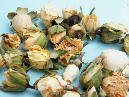 Ivory rose buds tiny