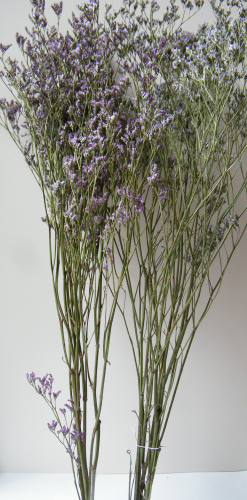 Sea lavender dried flowers lavender