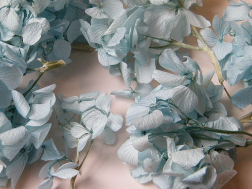 Hydrangea petals duck egg pale blue