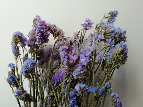 Statice dried flowers purple *Seconds