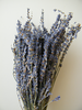 Dried lavender bunch SECONDS