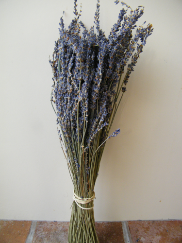 Dried lavender bunch SECONDS x50