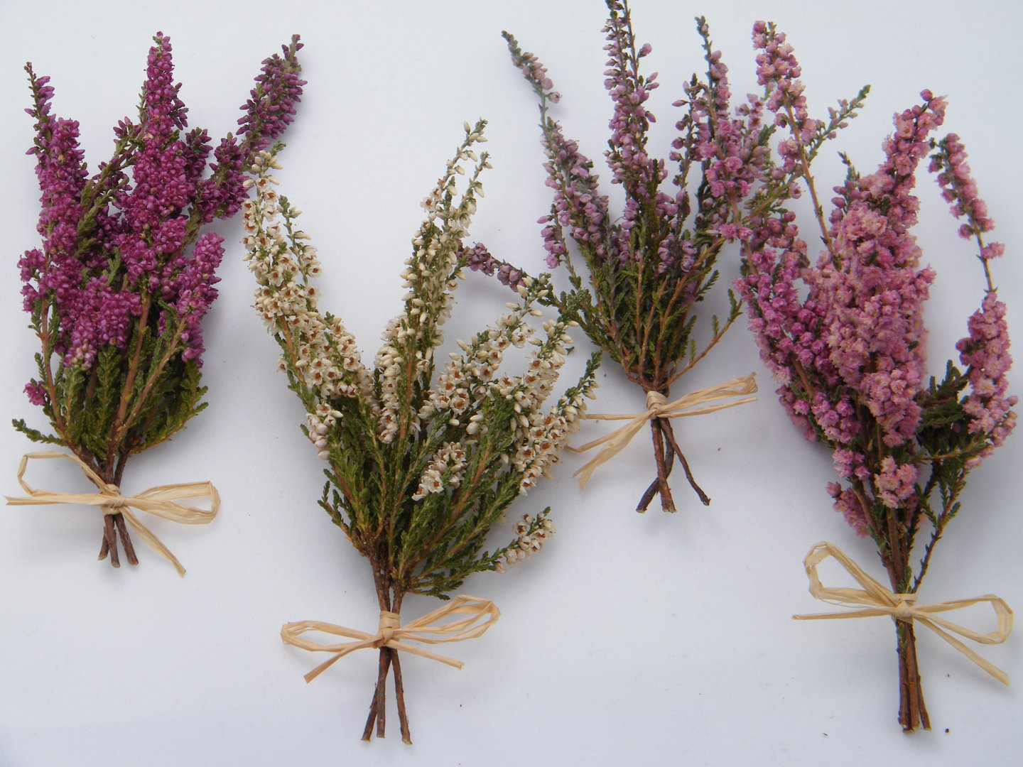 small dried lucky heather flowers 2 weeks   daisyshop