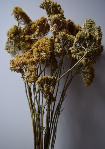 Achillea dried flower bunch *seconds