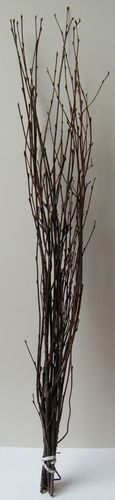 Birch twigs bundle natural