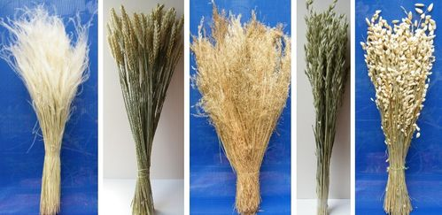 Five dried grasses bundle offer