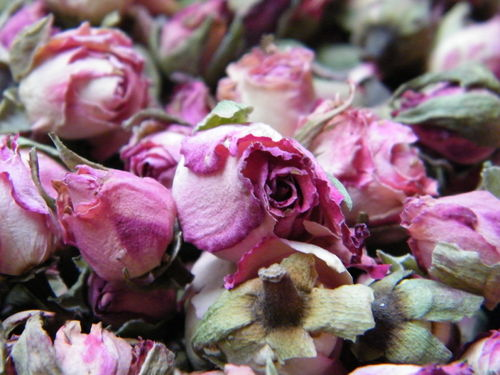 Pink edge rose buds dried
