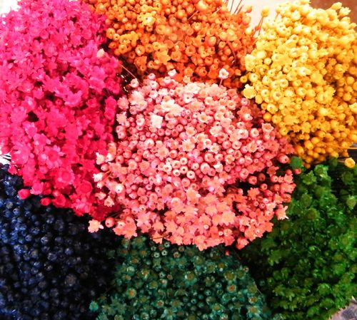 Glixia flowers dyed £1 off!