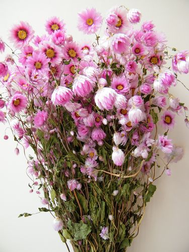 Dried flower bunch pink Rhodanthus wholesale