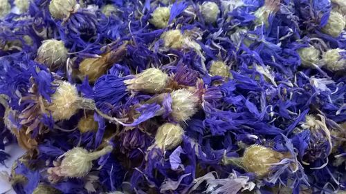 Whole dried cornflower heads blue