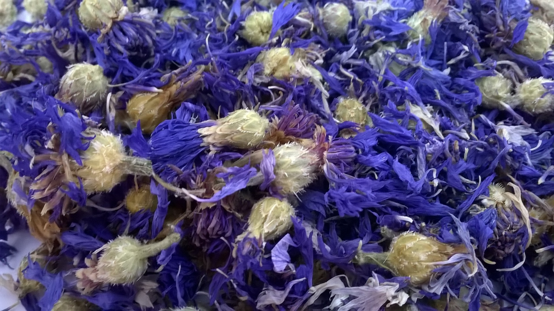 whole dried cornflower heads blue wholesale   dried