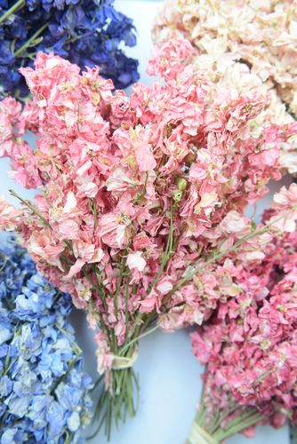 Delphinium bunch dried small