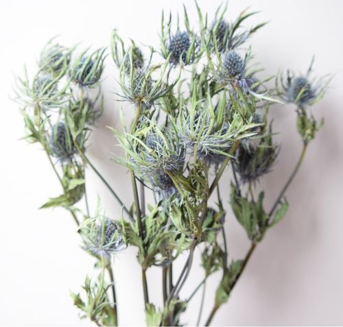 Eryngium thistle bunch dried