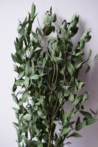 Dried foliage bunch - Parvi Eucalyptus UK