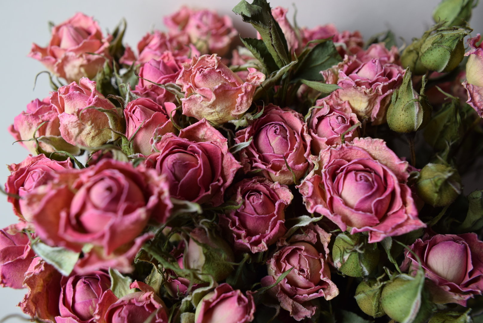 Pink Roses Dried Bunch Dried Flowers Daisyshop