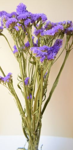 Statice dried flowers purple