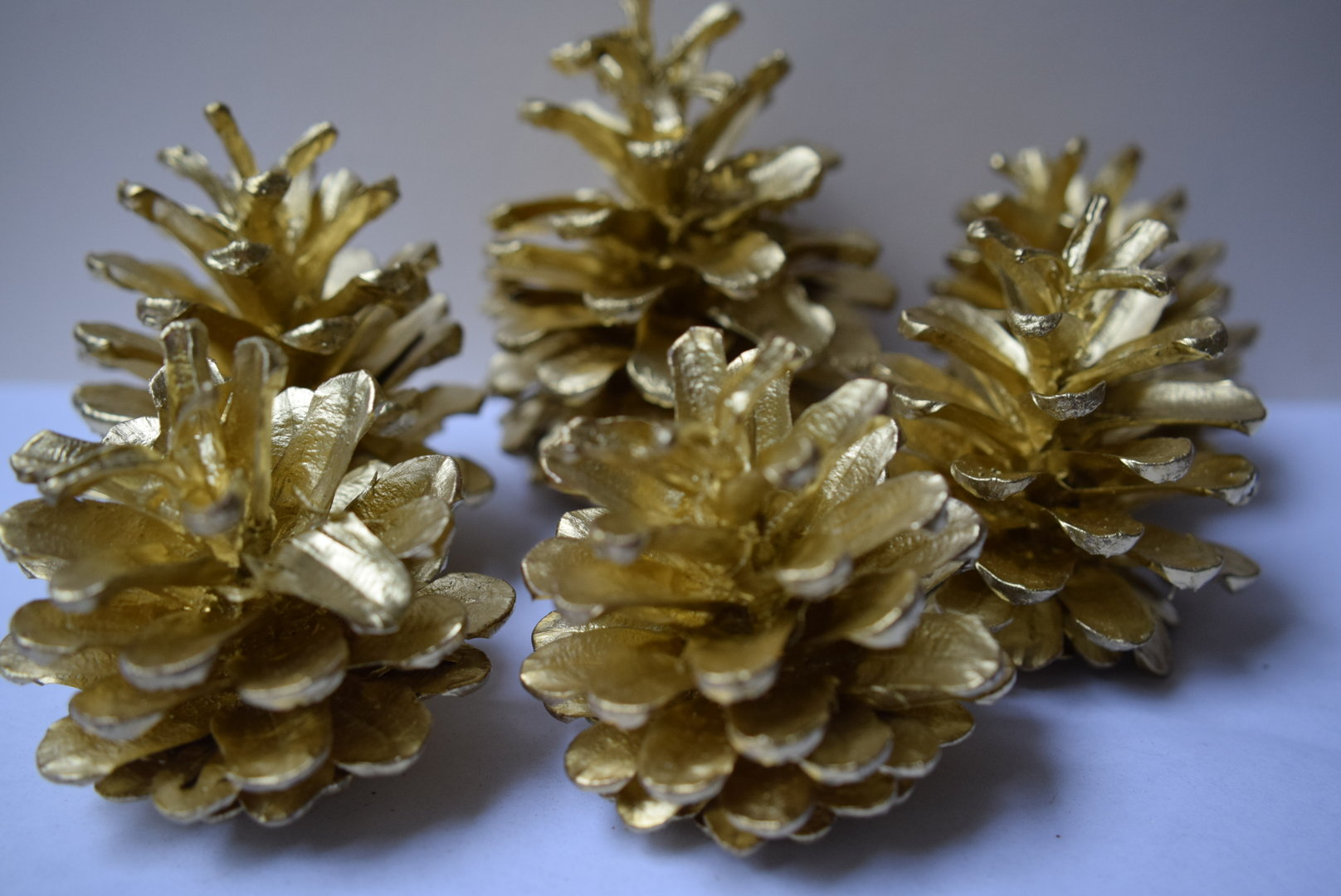 Pine cones gold bulk packs Daisyshop for dried flowers