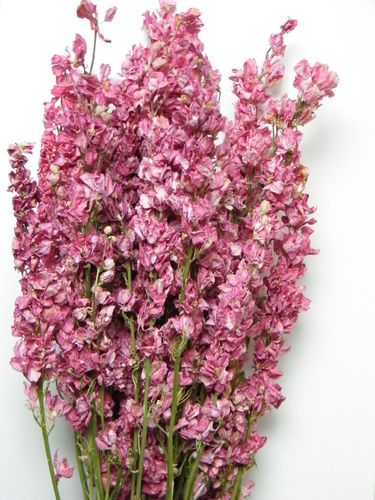 Delphinium bunches dried pink wholesale