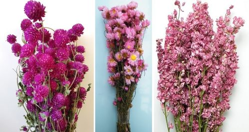 Pink dried flower bunches bundle offer