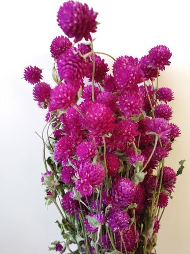 Clover flowers dried bunch pink wholesale