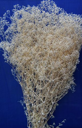 Gypsophila dried flower bunch bleached
