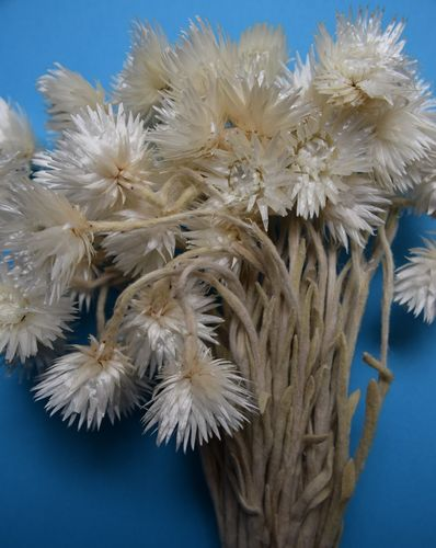 White dried flower bunch