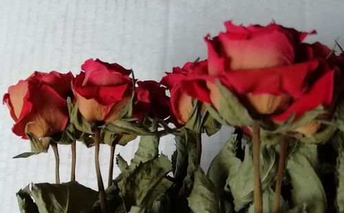 Red roses dried flower bunch large * Seconds