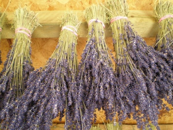 british dried flower bunches - dried lavender bunch - dried flowers