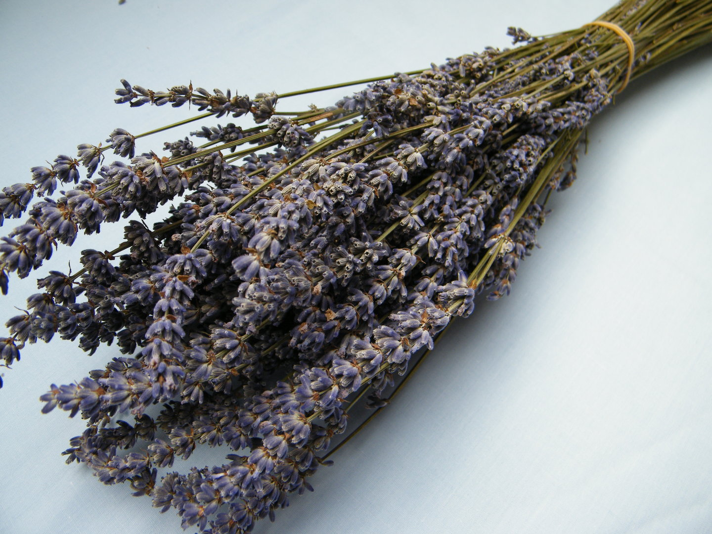 Dried Lavender Bunch Dried Flowers Daisyshop