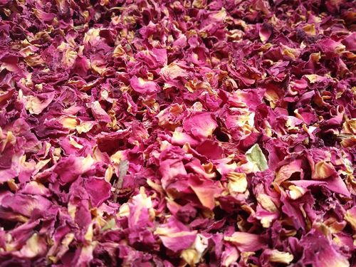 Burgundy rose petals wholesale