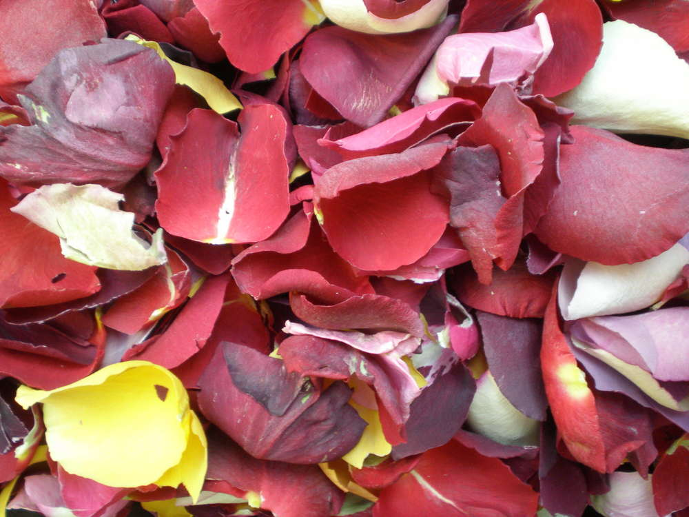 Freeze dried rose petals throwing quality - Dried flowers shop