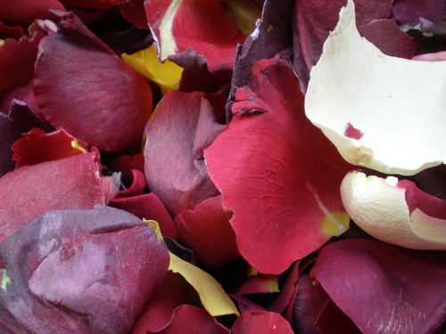 Freeze dried rose petals throwing quality