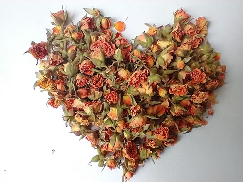 Peach rose buds tiny dry
