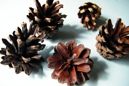 Pine cones medium natural