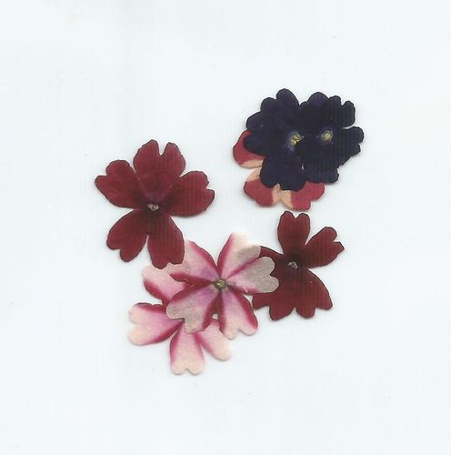 Pressed dried flowers verbena pack of 7