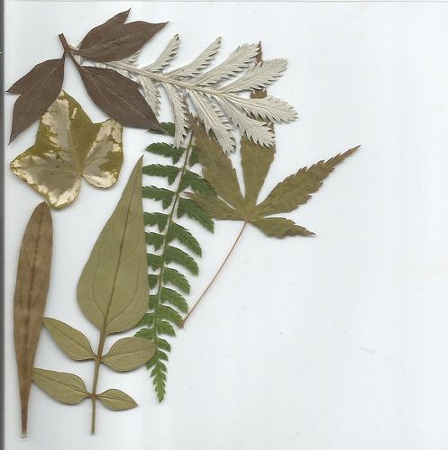 Pressed dried leaves mixed pack of 7