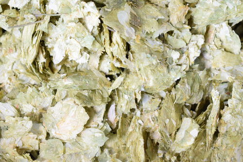 Dried British hops