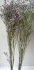 Sea lavender dried flowers bunch lavender £1 off
