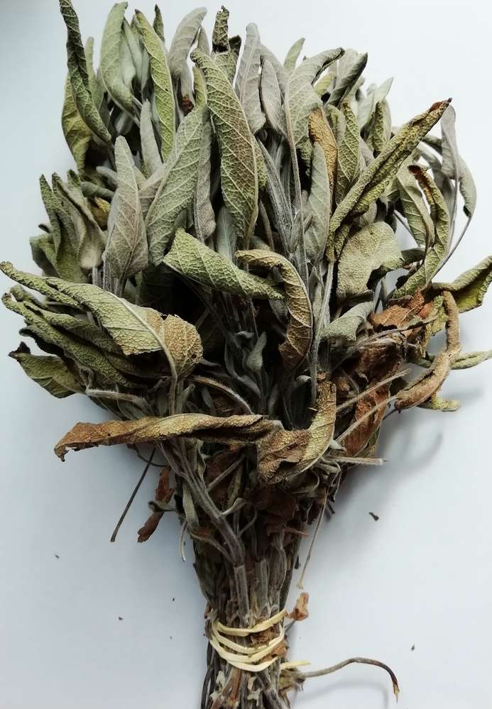 Sage dried herb bunch £1 Off! - Dried flowers - Daisyshop