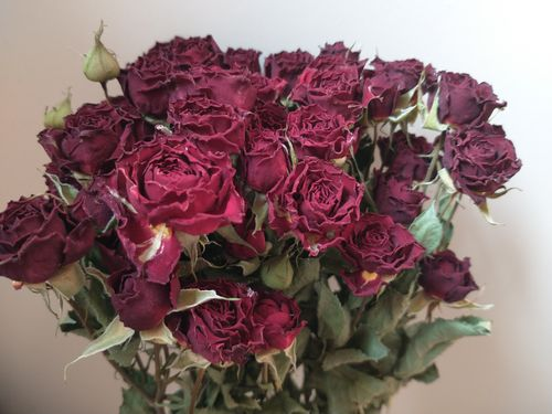 Dried rose flower bunch dark red