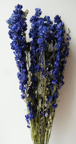 Delphinium bunch dried dark blue - larkspur stems