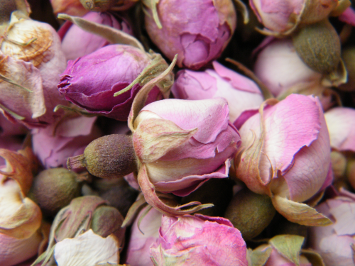 Dried rose buds, baby pink