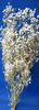 Gypsophila dried flower bunch UK natural