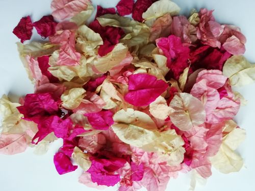 Bougainvillea petal confetti mixed colours
