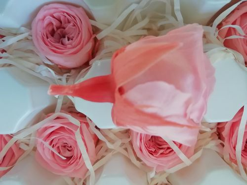 Preserved rose bud salmon pink - Sale!