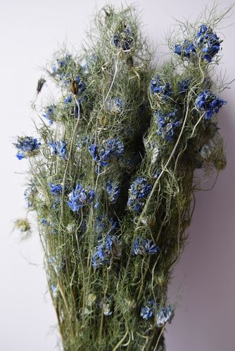 Dried flower bunch blue nigella