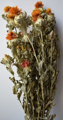 Safflower - Carthamus - orange dried flowers bunch